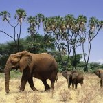 فيل elephant Size:190.10 Kb Dim: 1024 x 768