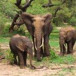 فيل elephant Size:332.20 Kb Dim: 1600 x 1098