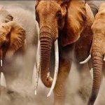 فيل elephant Size:85.90 Kb Dim: 1024 x 768