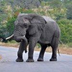 فيل elephant Size:140.40 Kb Dim: 1200 x 798