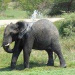 فيل elephant Size:678.40 Kb Dim: 2500 x 1875