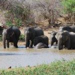 فيل elephant Size:4567.30 Kb Dim: 3872 x 2592