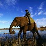 فيل elephant Size:394.20 Kb Dim: 1280 x 800