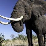 فيل elephant Size:396.30 Kb Dim: 1280 x 1024
