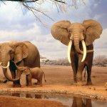 فيل elephant Size:135.30 Kb Dim: 1024 x 768