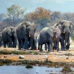 فيل elephant Size:592.60 Kb Dim: 1280 x 624