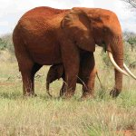 فيل elephant Size:93.30 Kb Dim: 1600 x 1200