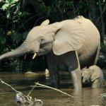 فيل elephant Size:503.90 Kb Dim: 2500 x 1667