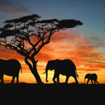 فيل elephant Size:864.50 Kb Dim: 1067 x 800