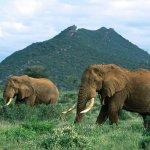 فيل elephant Size:176.00 Kb Dim: 1024 x 768