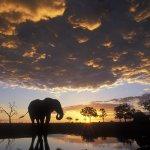 فيل elephant Size:276.70 Kb Dim: 1600 x 1200