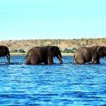 فيل elephant Size:153.00 Kb Dim: 1280 x 800