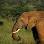 فيل elephant Size:115.20 Kb Dim: 1200 x 801