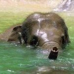 فيل  Elephant 1 Size:98.30 Kb Dim: 1020 x 765