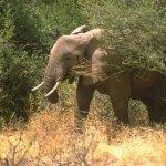 فيل  Elephant 10 Size:50.00 Kb Dim: 600 x 395
