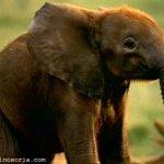 فيل  Elephant 15 Size:32.00 Kb Dim: 600 x 457