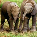 فيل  Elephant 2 Size:60.60 Kb Dim: 600 x 455