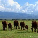 فيل  Elephant 5 Size:44.20 Kb Dim: 600 x 449