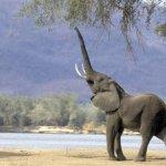فيل  Elephant 7 Size:32.10 Kb Dim: 500 x 375