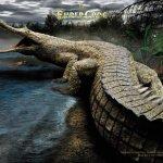 تماسيح ، تمساح Size:165.10 Kb Dim: 1024 x 768