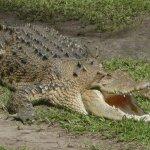 تماسيح ، تمساح Size:348.80 Kb Dim: 1600 x 1200