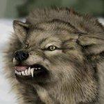 ذئب ، ذئاب  Size:30.10 Kb Dim: 467 x 422