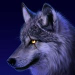 ذئب ، ذئاب  Size:195.20 Kb Dim: 1600 x 1200