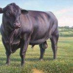ثور bull Size:43.80 Kb Dim: 600 x 488