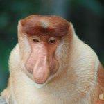 جمال camel10 Size:43.90 Kb Dim: 600 x 400