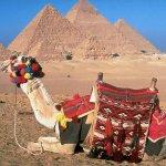 جمل camel Size:115.70 Kb Dim: 1024 x 768
