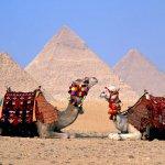 جمل camel Size:137.00 Kb Dim: 1024 x 768