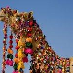جمل camel Size:138.80 Kb Dim: 1024 x 768