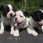 كلب dog Size:196.80 Kb Dim: 1280 x 960