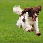 كلب dog Size:17.30 Kb Dim: 470 x 352