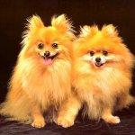 كلب dog Size:134.20 Kb Dim: 1024 x 768