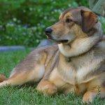 كلب dog Size:135.60 Kb Dim: 1024 x 768