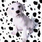 كلب dog