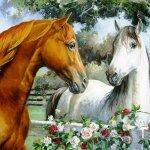 خيول horses3