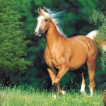 خيول horses8 Size:133.00 Kb Dim: 400 x 300