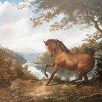 خيول horses13 Size:64.40 Kb Dim: 581 x 450