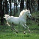 خيول horses1