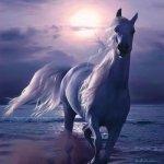 خيول horses6 Size:28.40 Kb Dim: 350 x 442