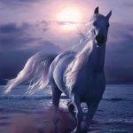 خيول horses6