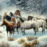 خيول horses10