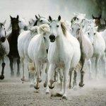 خيول horses13