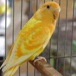 طيور Size:27.70 Kb Dim: 452 x 317