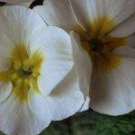 ورود وأزهار