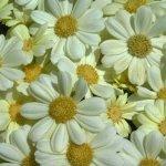 زهور Size:31.00 Kb Dim: 600 x 399