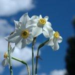 زهور Size:67.80 Kb Dim: 568 x 671