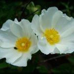 زهور Size:33.30 Kb Dim: 640 x 480
